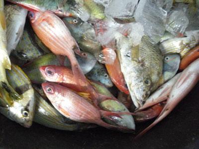 Fish market andres boca chica dominican republic for Fish market boca